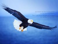 *** Freedom ***