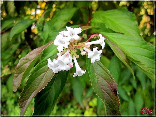 fleur bl