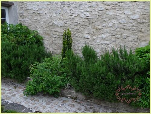 jardin secret (2)