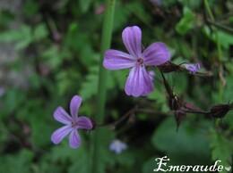 Photo Fleurs - 24.06.11 - 01