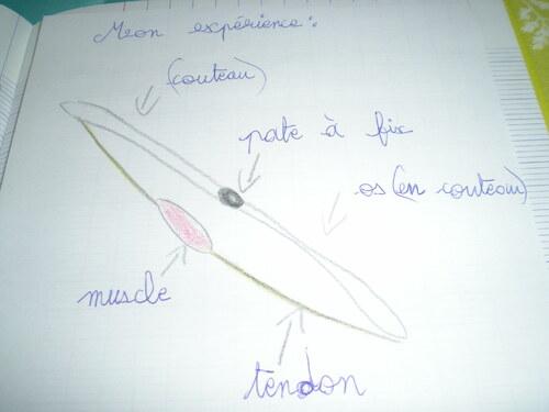 Comment sont reliés deux os dans une articulation?