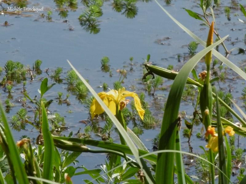 Une balade à MIMIZAN (40), au bord du Lac à la Promenade Fleurie, le 22 mai (suite n° 3 et fin)...