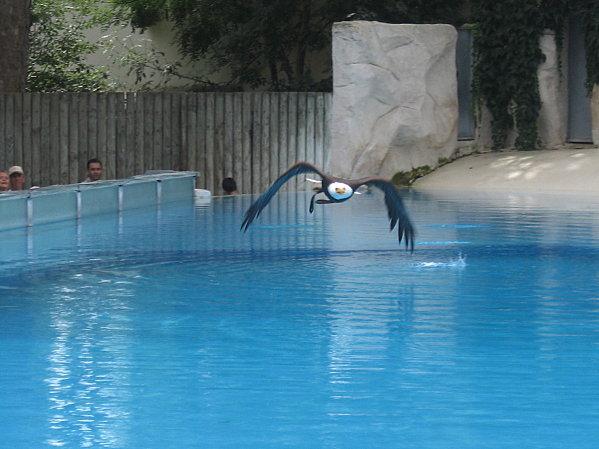 robe;Zoo de Beauval 27 juillet 2009 139