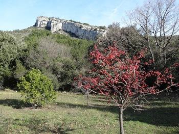Un bel arbre couvert de fruits : cormier (sorbus domesticus) ou alisier (sorbus aria)?