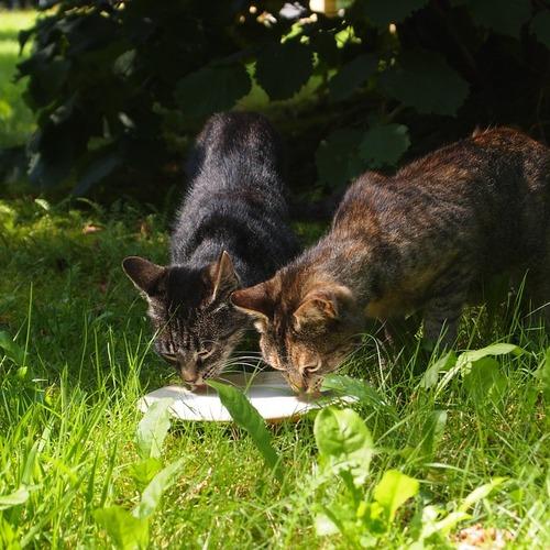 Défense des chats errants à Champeaux