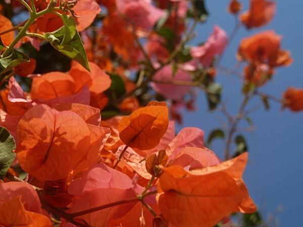 fleurs-rhodes-7.jpg