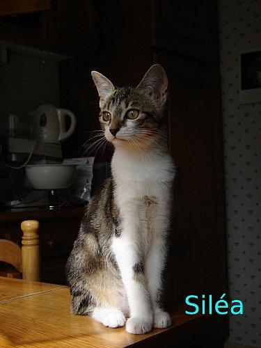 DSC00438_Silea.jpg
