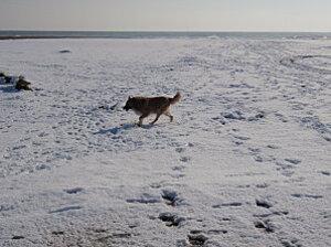 le barcares sous la neige 055