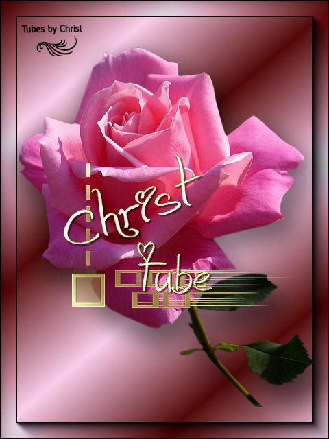 Tube News Rose 1.