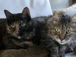 Bilan de santé pour chats