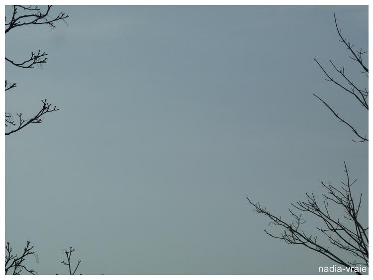 Mon coin de ciel du Québec en ce 14 avril.
