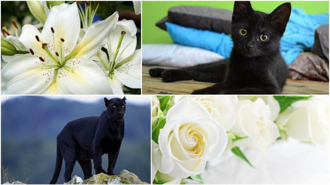 Signification des couleurs:le noir et le blanc