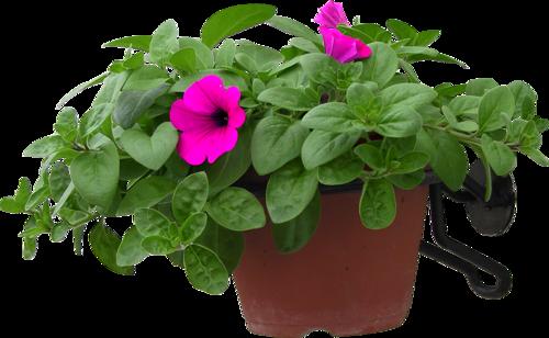 Fleurs en Pôts Série 5