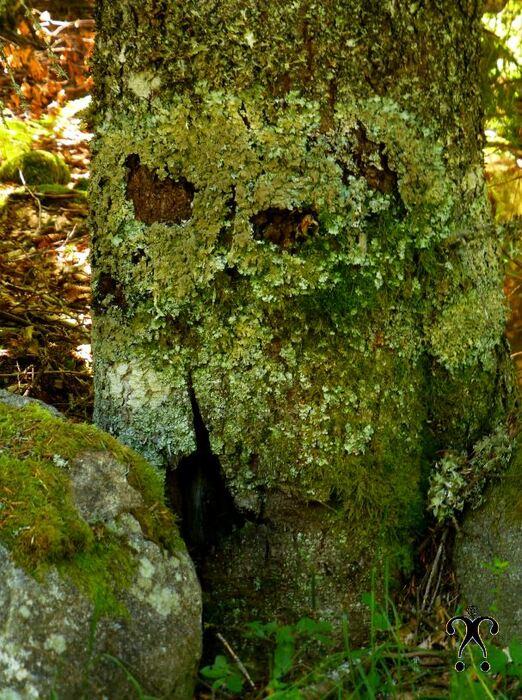 Le sage de la forêt