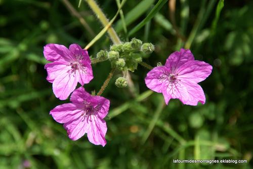 Quelques fleurs de juin