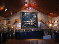 iceland_-_icelandic_phallological_museum_-_husavik_-_penis_-_road_trip_4890001291