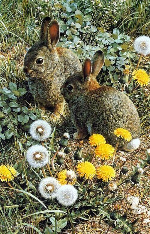 Petits lapins drôles(2)
