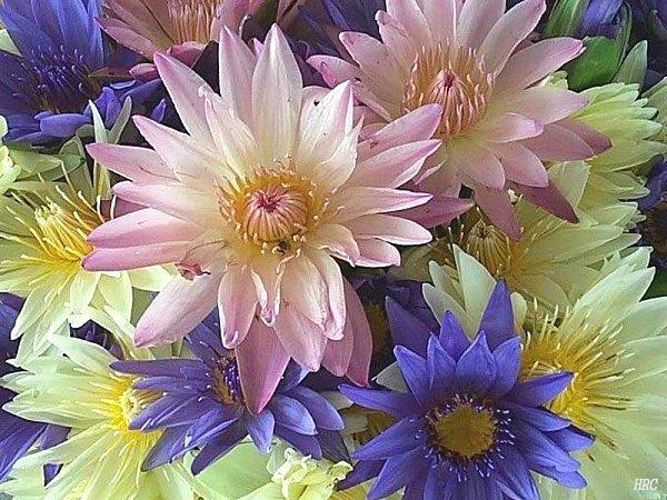 fleurs06