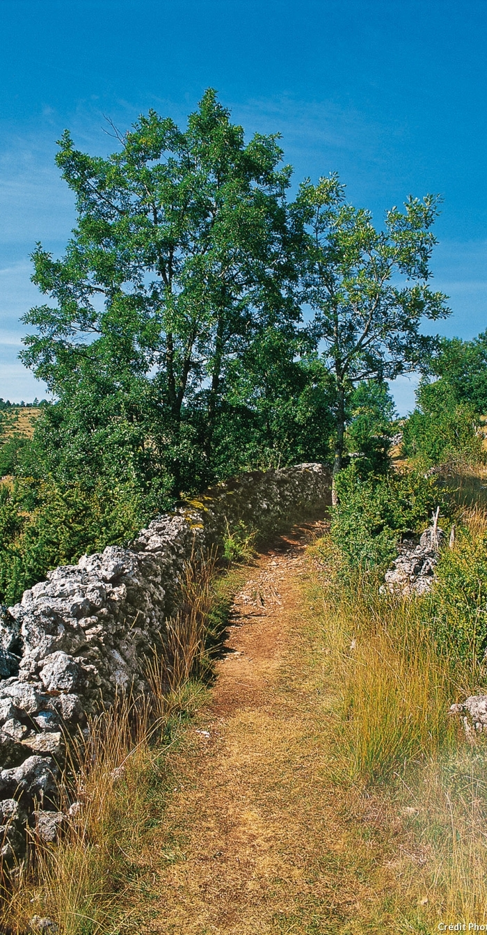 Compostelle, sur le chemin du Velay