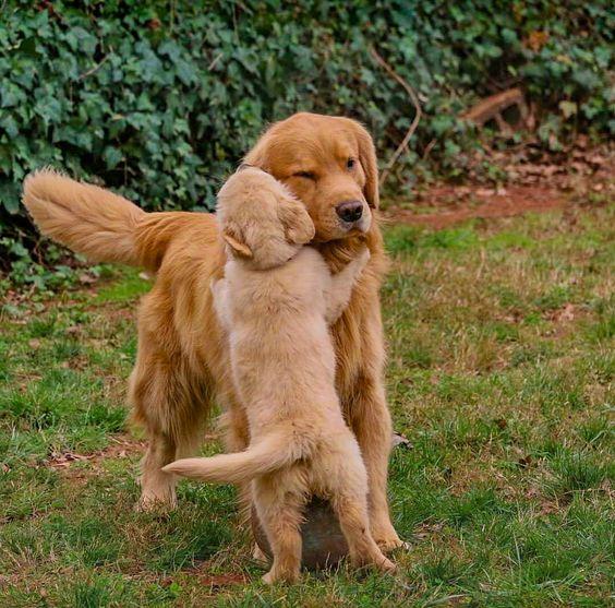 Pupper hugging her mom