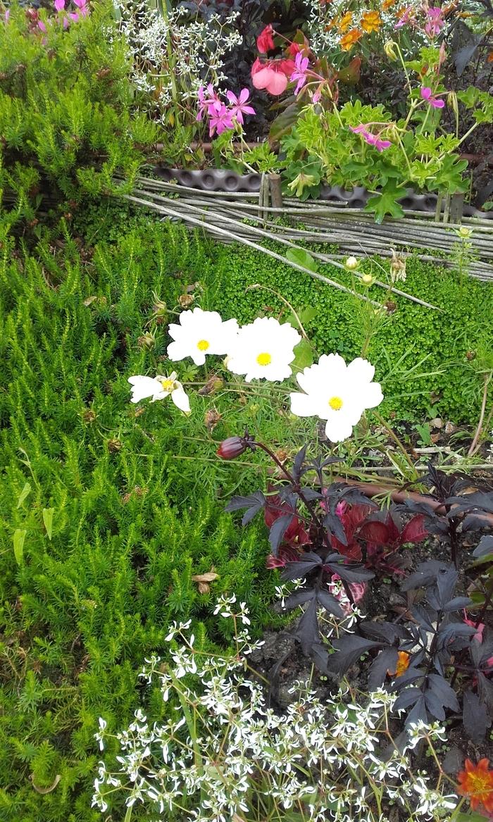 Mois  des fleurs  ( la promeneuse )