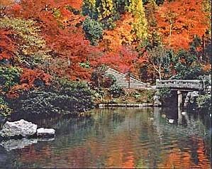 imgname--visiting kyoto---50226711--KyotoAutumn