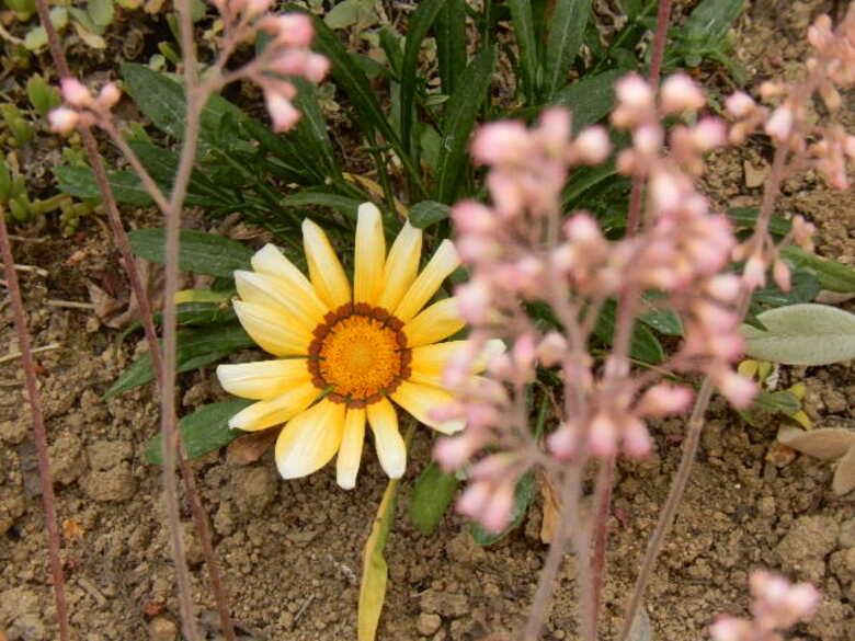 Jardin fleuri : Vers un mélange semis-sauvage