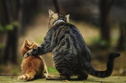 """Résultat de recherche d'images pour """"chat alors !!!"""""""