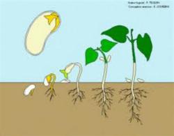QLM: végétaux: de la graine à la plante