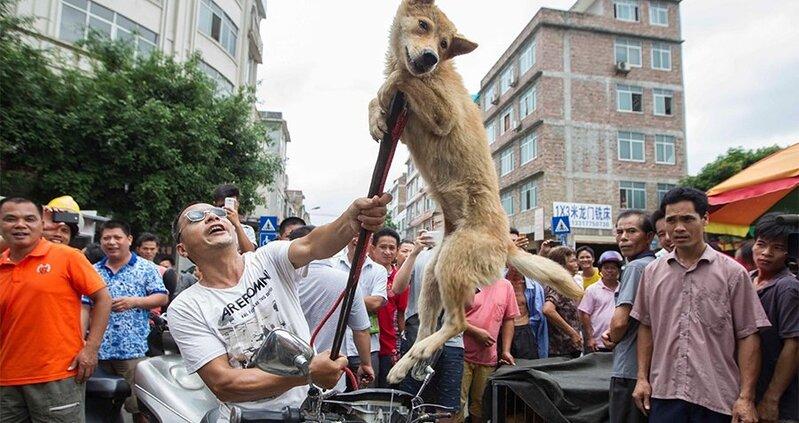 Yulin : la viande de chien, son festival, ses opposants