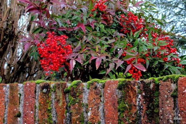L01---Vieux-mur.JPG