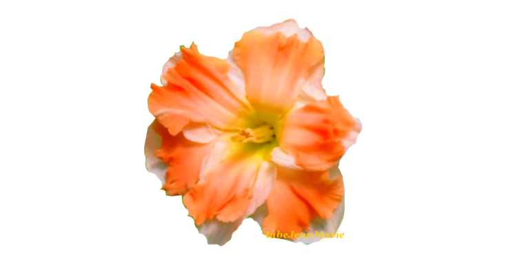 tube narcisse orange