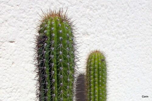 Voila de beaux cactus !