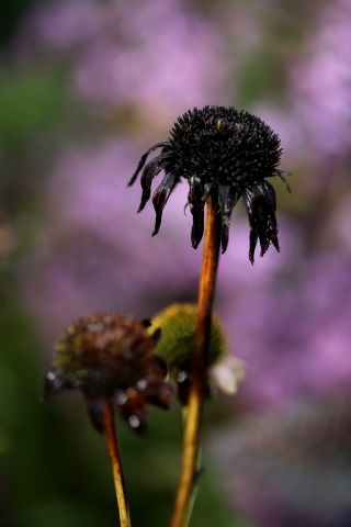 Comment concilier jardin naturaliste et esthétisme