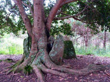 """Résultat de recherche d'images pour """"plaines arbre hd"""""""