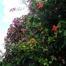 Dans mon jardin (3) - Photo :  Bobnad