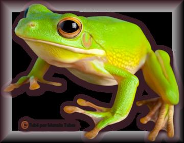 Tube grenouilles / Crapauds 2941