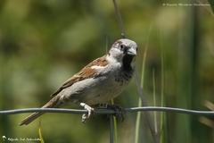 Diversité d'oiseaux 4 - 2014