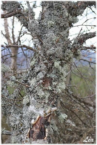 Nature-6939-lichens-600x900.jpg