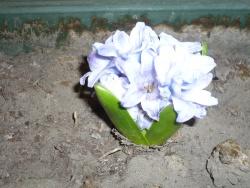 Jardinage - 2 -
