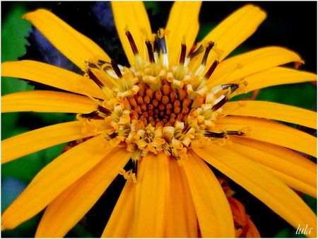 Macros de Fleurs