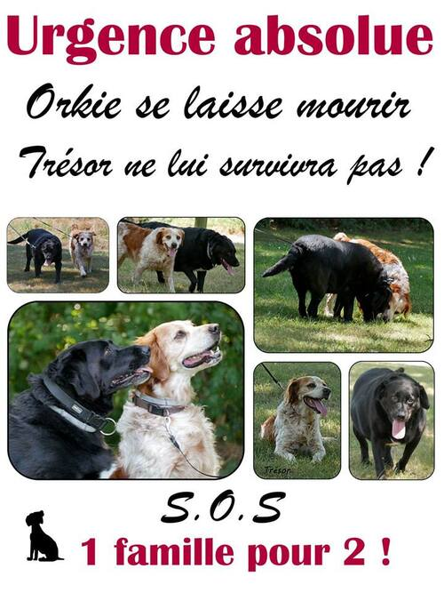 SOS SOS SOS POUR ORKIE - Asso les Poilus d'ici et d'ailleurs - LE HAVRE (76)