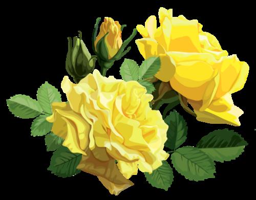 20 images de roses