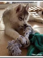 Laïcko (2 mois)