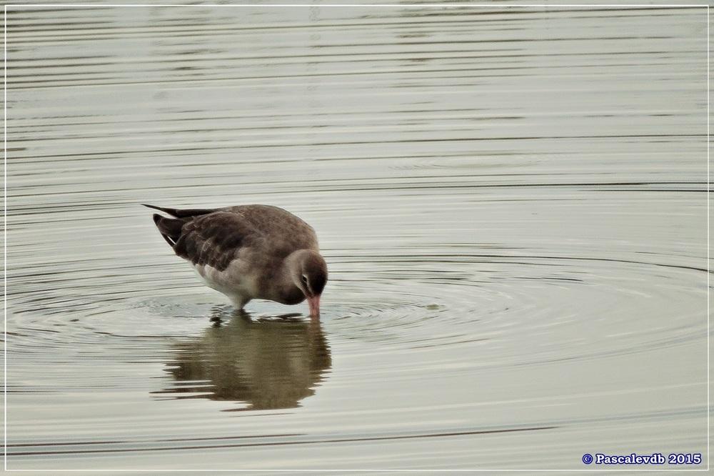 Réserve ornitho du Teich - Septembre 2015 - 3/6