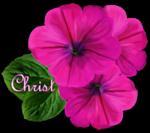 Kiffe - Tubes Christ