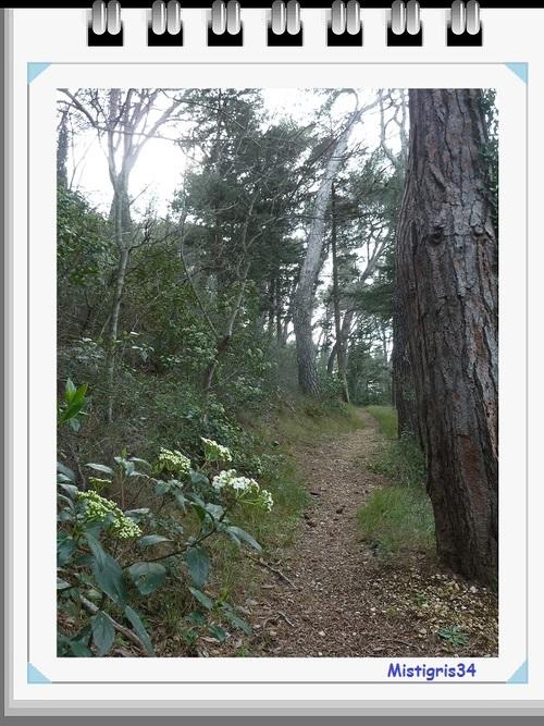 PROMENONS-NOUS dans les bois ...