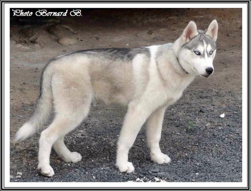 Kiska (5 mois)