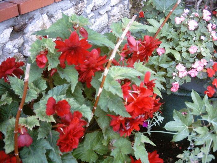 un petit tour dans mon jardin