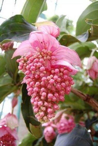 Les Fleurs Exotiques